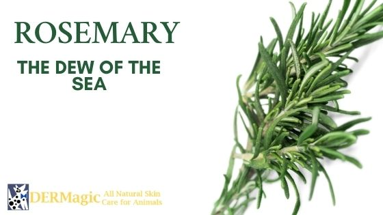 Rosemary, Dew of the Sea