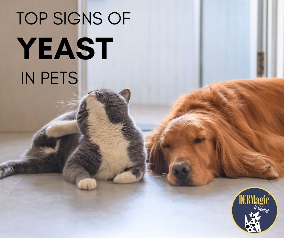 Top Signs of Yeast in Dogs