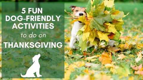 5 dog-friendly activities thanksgiving