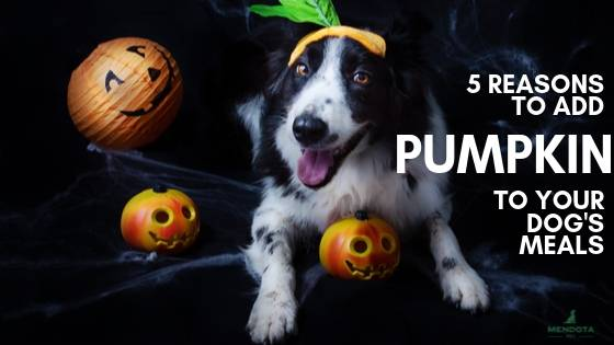 why does pumpkin help dogs
