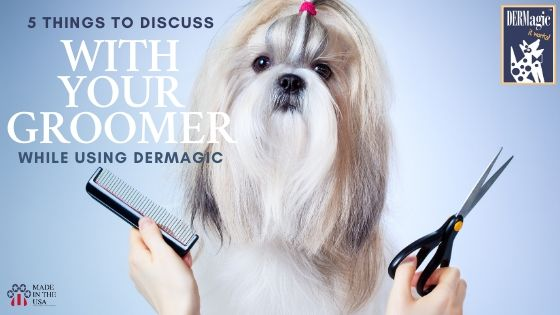 5 things to discuss with your groomer while using DERMagic