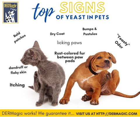 Signs of Yeast in Pets