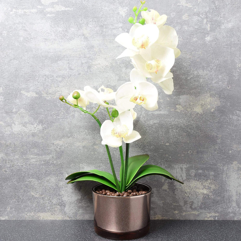 The Flower Patch Cream Orchid in Glass Pot 40cm