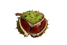 Aesculus hippocastanum (horse chestnut) seed extract