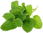 Melissa officinalis leaf extract (lemon balm)