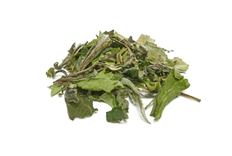 Camellia sinensis (white tea) extract