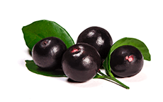 Euterpe oleracea (acai) fruit extract