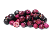 Kunzea pomifera fruit extract