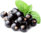 Ribes nigrum (blackcurrant) oil