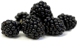 Rubus fruticosus (blackberry) fruit extract