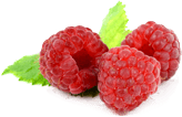 Rubus ideaus (raspberry) fruit extract