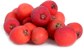 Syzgium luehmannii (riberry) fruit extract