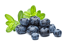 Vaccinium myrtillus (bilberry) fruit extract