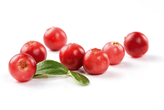 Vaccinium oxycoccos (cranberry) fruit extract
