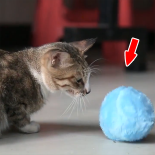 Automatic Rolling Pet Ball