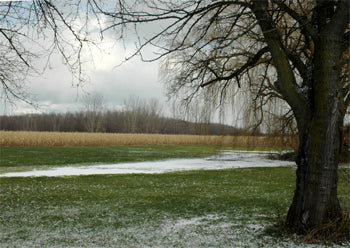 Fireflys Disappearing Reappering Pond with December Snow