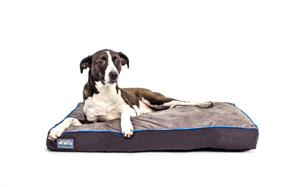 Medium Thick Orthopedic Dog Bed