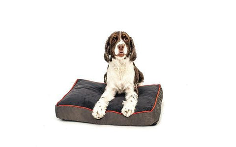 orthopedic foam dog bed