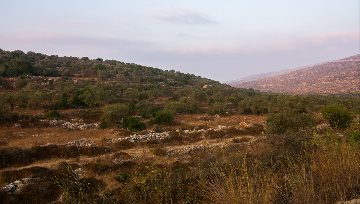 Restoring Israel one tree at a time.