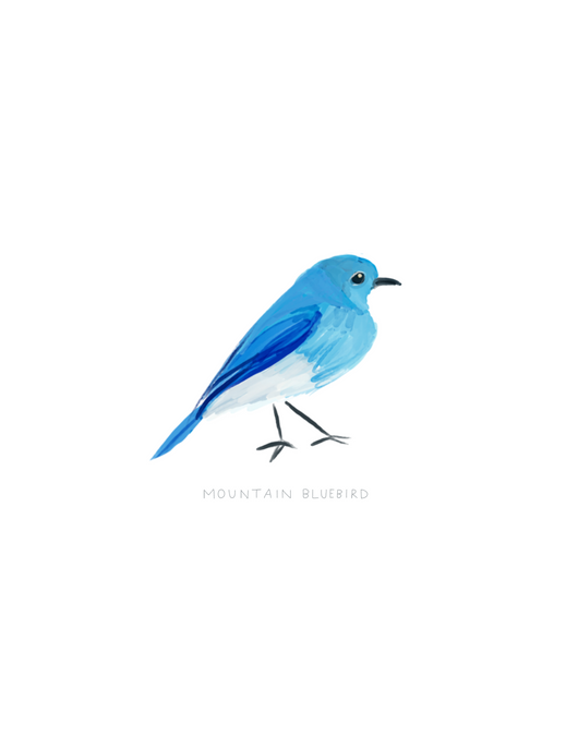 Mountain Bluebird Illustration