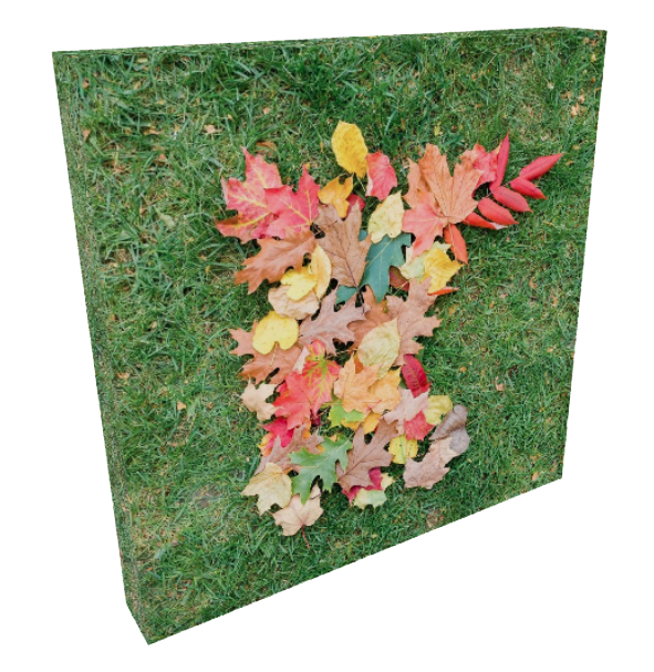 Colorful Autumn Leaves in the Shape of Minnesota