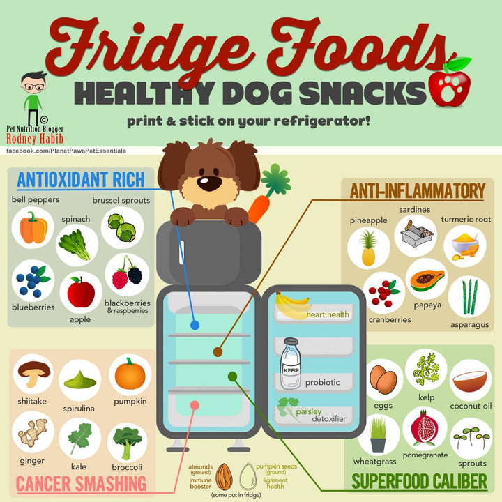 Healthy Foods For Dog Infographic