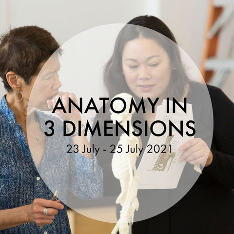 Anatomy in 3 Dimensions