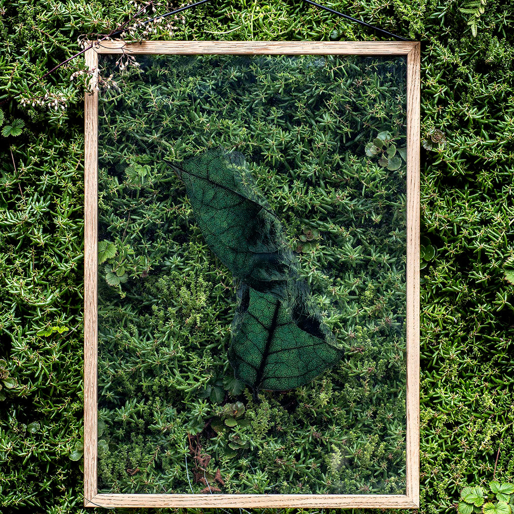Floating Leaves A5-04 (Print Only)