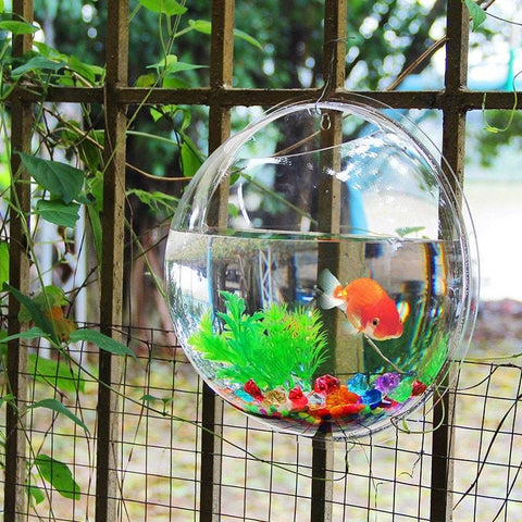 Sunday Gold - Acrylic Fish Bowl Wall Hanging Aquarium Tank