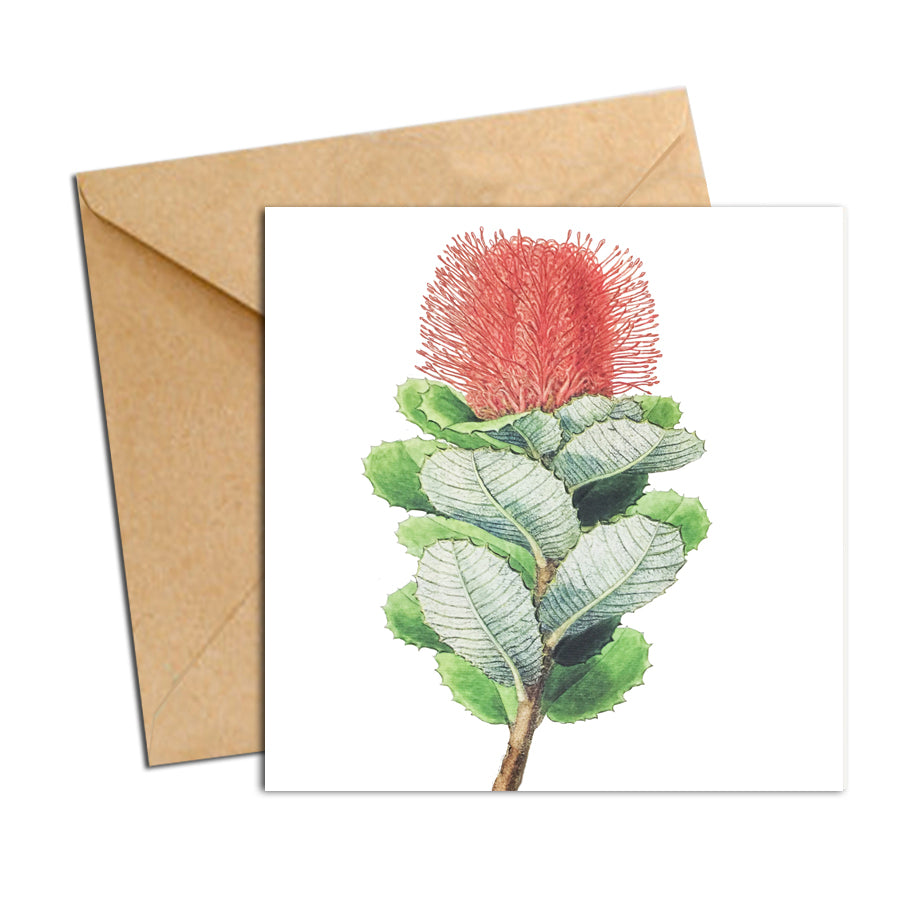 Card - Botanical Natives Banksia