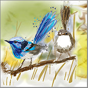 Small Cards (Pack of 10) - Bird Wrens