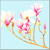 Small Cards (Pack of 10) - Magnolias