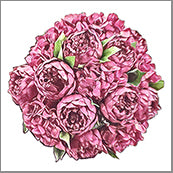 Small Cards (Pack of 10) - Bunch of Peonies