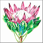 Small Cards (Pack of 10) - Natives Proteas Single