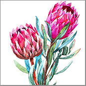 Small Cards (Pack of 10) - Natives Proteas Two