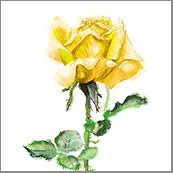 Small Cards (Pack of 10) - Rose Yellow