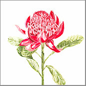 Small Cards (Pack of 10) - Native Waratah