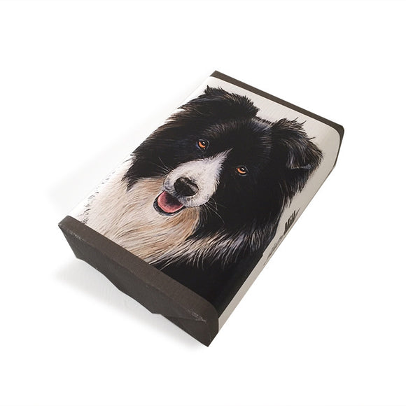 Soap Dog Broder Collie