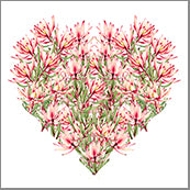Small Cards (Pack of 10) - Heart leucadendron