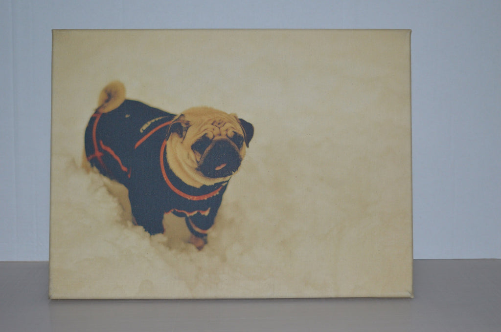 Stretched canvas print - Pug in the snow