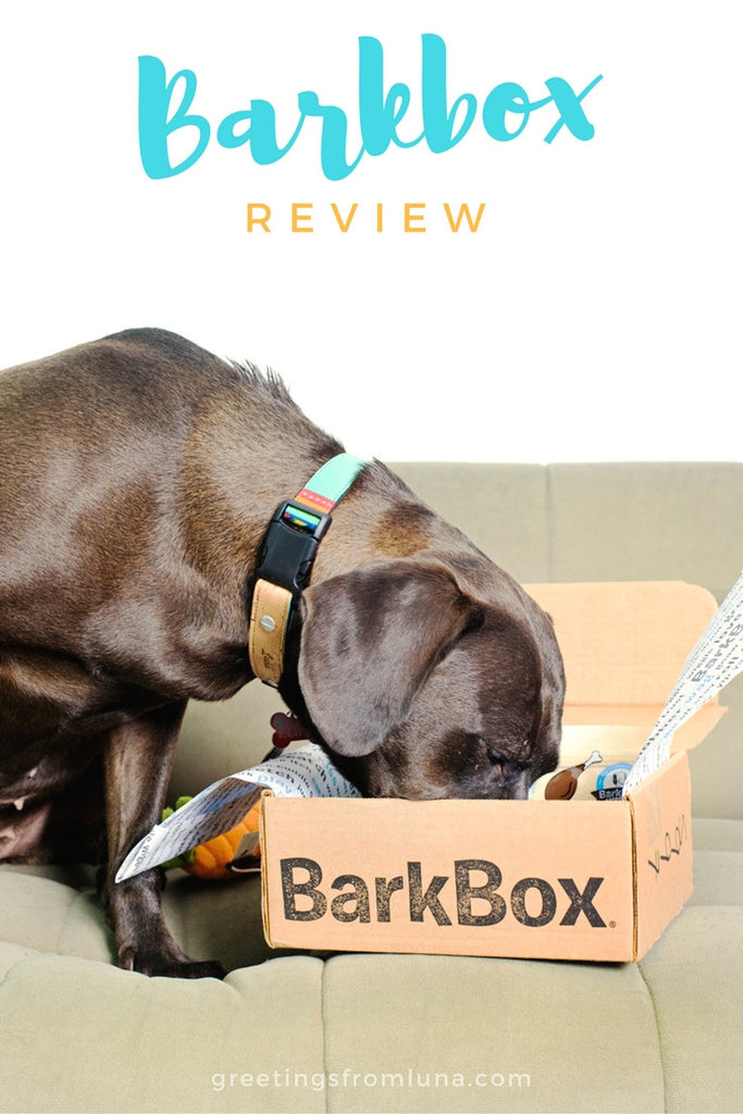 Barkbox Review for Large Dogs - August 2016