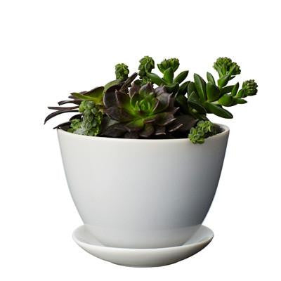 Planter Petite -  Feather Grey *Premium Collection*