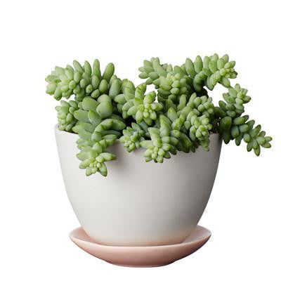 Planter Petite - Peach Eggshell *Premium Collection*