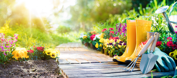 6 Reasons why you should be gardening this Summer!