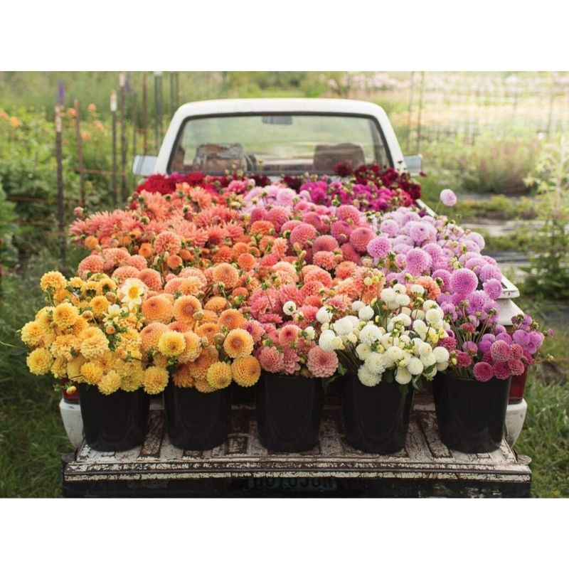 Puzzle 2-sided 500 Piece | Floret Farm's Cut Flower Garden