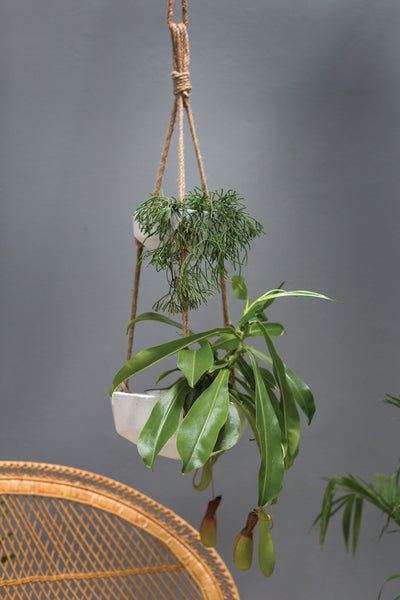 Hanging Vase | Mollywood Small