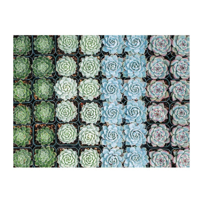 Puzzle 2-sided 500 Piece | Succulent Garden