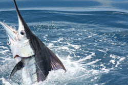 World's Top 10 Saltwater Game Fish