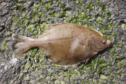 Fishing for Flounder