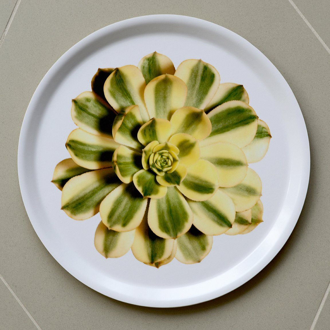 FLIEPAPER, Succulent Tray by FLIEPAPER®, - Placewares